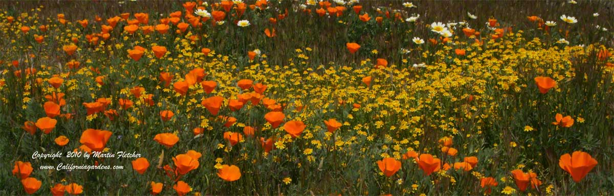 California Native Plant List