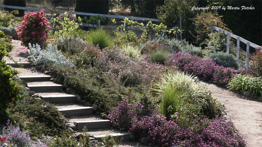 Drought tolerant plants list california gardens for Gardens in southern california
