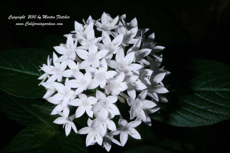 white star cluster - photo #9